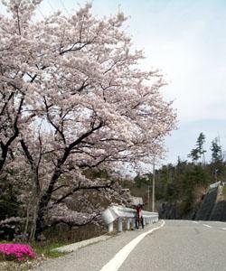 さくら咲くTOJ南信州ステージのコース